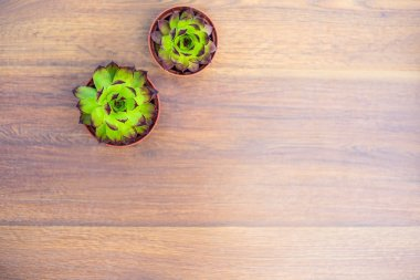 Plants in pots and containers on a flat wooden background. Succulents in pots. Gardening decoration.