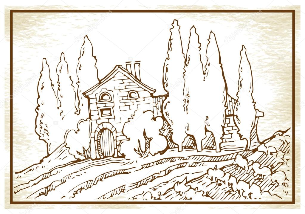 Hand made sketch grape fields and vineyards.