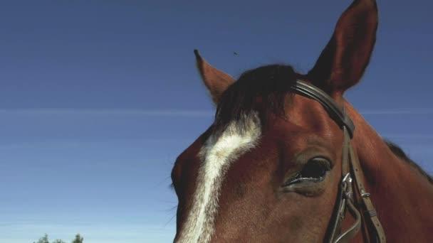 Detail hlavy koně s modrá obloha