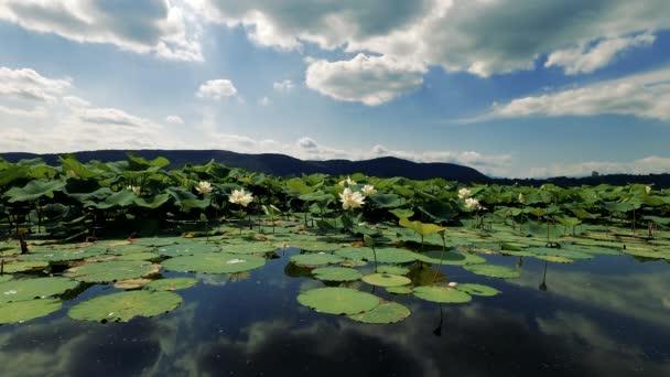 Krajina na jezeře s lotosovými květinami - 6K