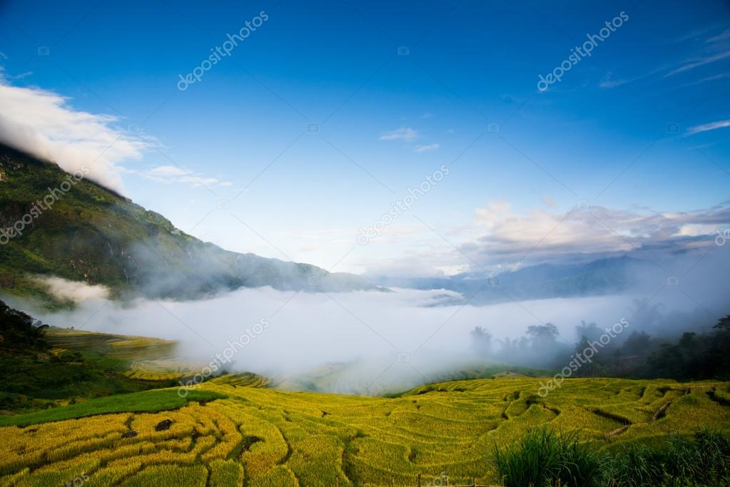 Beautiful terraced rice field