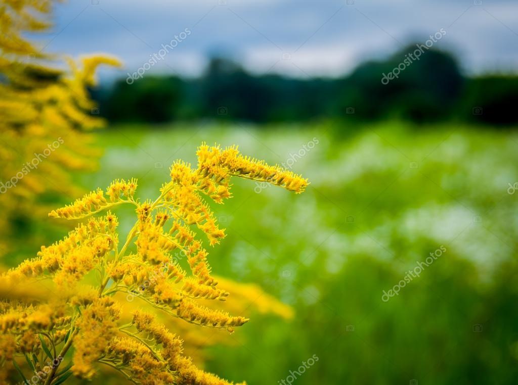 La Belle Fleur Jaune Sauvage Photographie Fotolesnik C 79800440