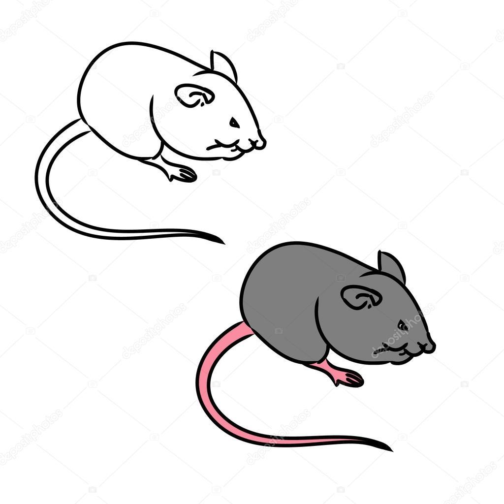 Rat souris esquisse le dessin en couleur image - Dessin d un rat ...
