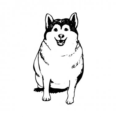 Fat husky puppy