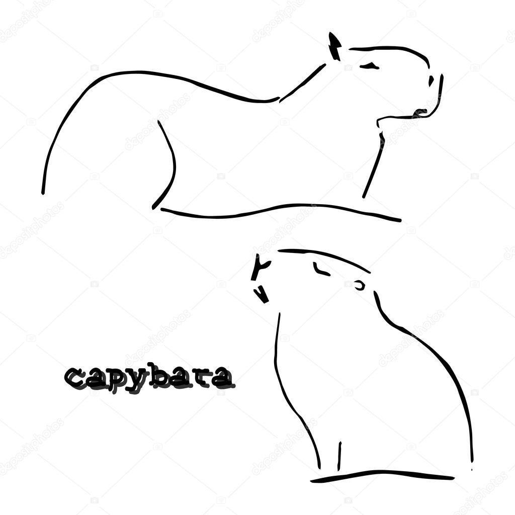 Capybara Stock Vectors, Royalty Free Capybara Illustrations ...