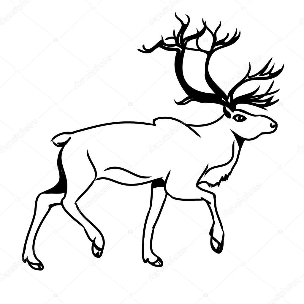 Deer Contour Line Drawing : Venado gris contorno — archivo imágenes vectoriales