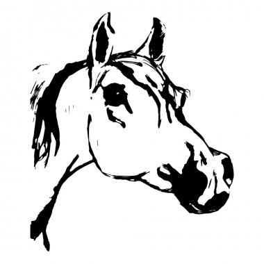 Arabian horse, horse (Arab, head). Drawing by hand.
