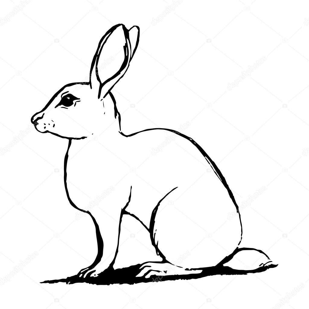 Dibujo de liebre en blanco y negro vector de stock for Lepre immagini da stampare