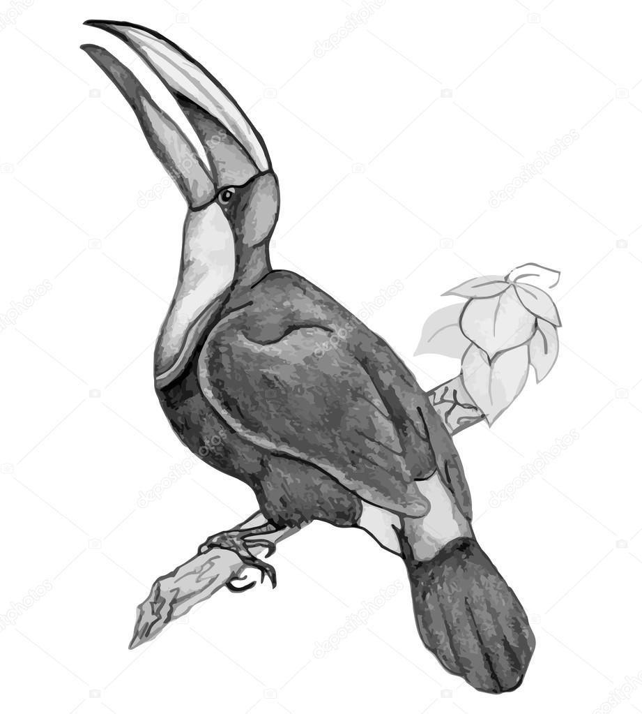 Tukan Ptak Na Gałęzi Ołówkiem Rysunek Ręka Grafika Wektorowa