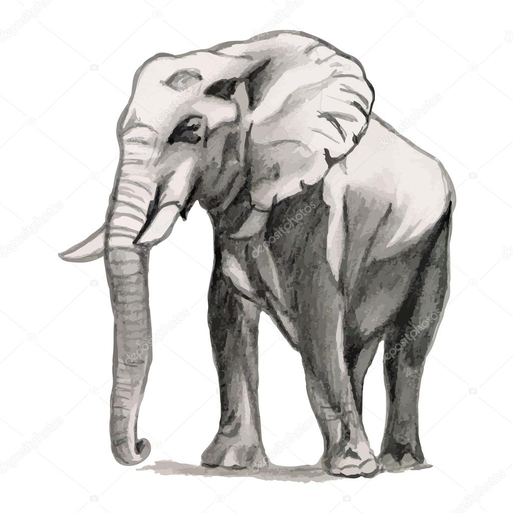 Elephant drawing pencil sketch stock vector