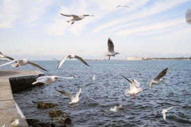 The sea gulsl