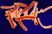 tubercolosi del micobatterio