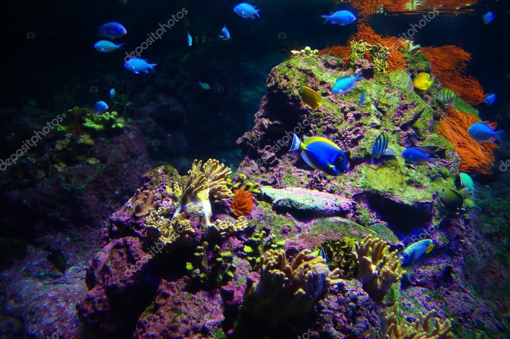 Fondali marini tropicali foto stock eureka 89 82950582 for Immagini coralli marini
