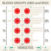Diagramm und Infografik der Blutgruppensysteme abo und rhd. Vektorabbildung eps10.
