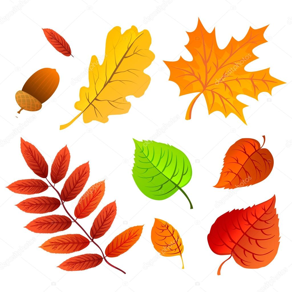 Autumn Leaves Set Nature Symbol Vector Collection Isolated On White Background Stock Vector C Marina Art 88329672