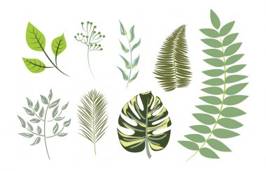 Collection Exotic leaves (individual objects)