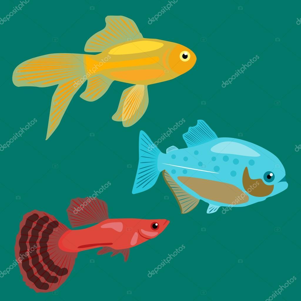 Aquarium fish. Goldfish, Piranha, Guppy