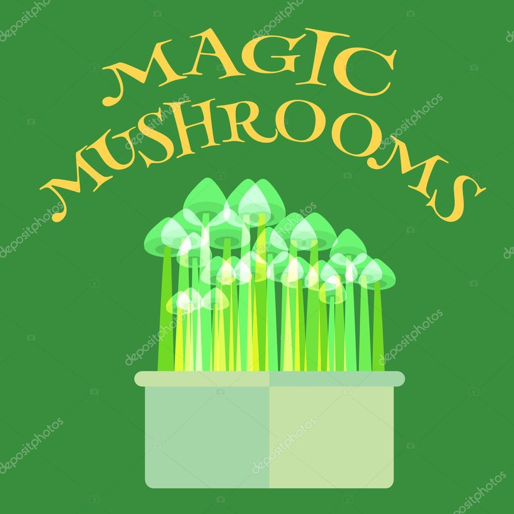 Magic mushrooms grow kit