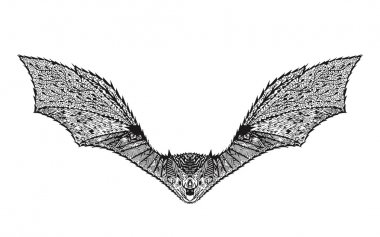 Zentangle stylized bat. Sketch for tattoo or t-shirt.