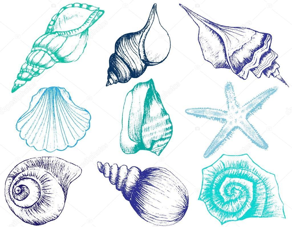 様々 な貝殻イラスト白い背景で隔離の描画のコレクションを手します