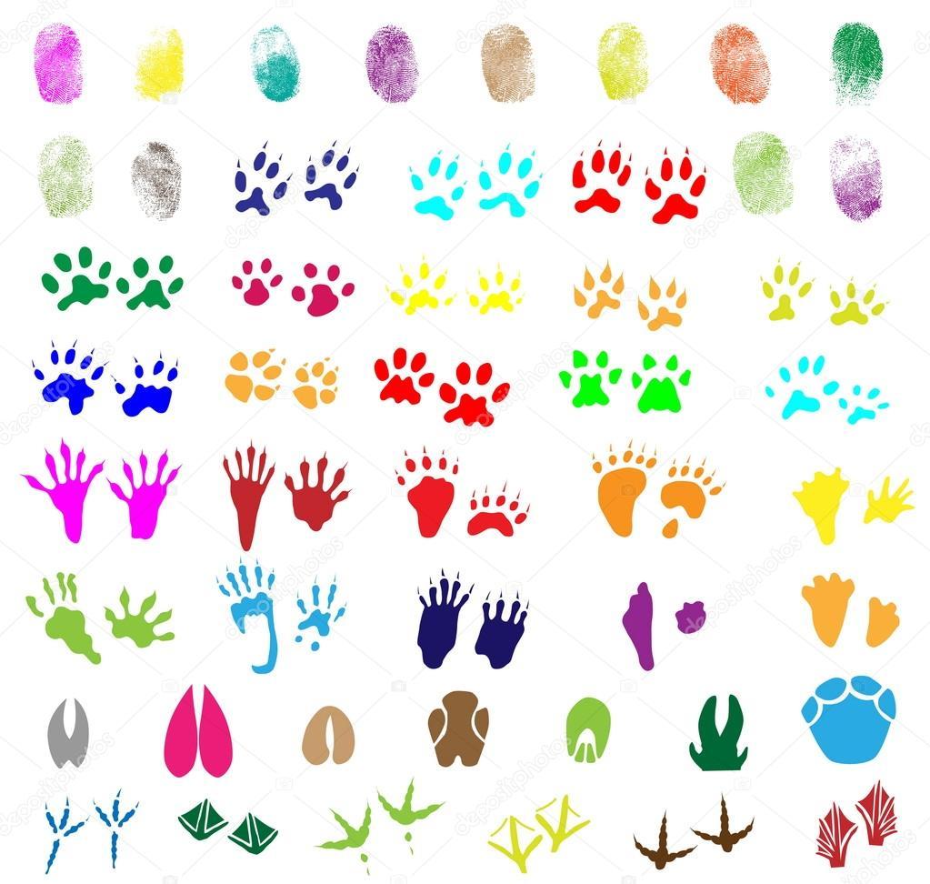 Sammlung Von Fingerabdrucken Tier Und Vogelarten Routen