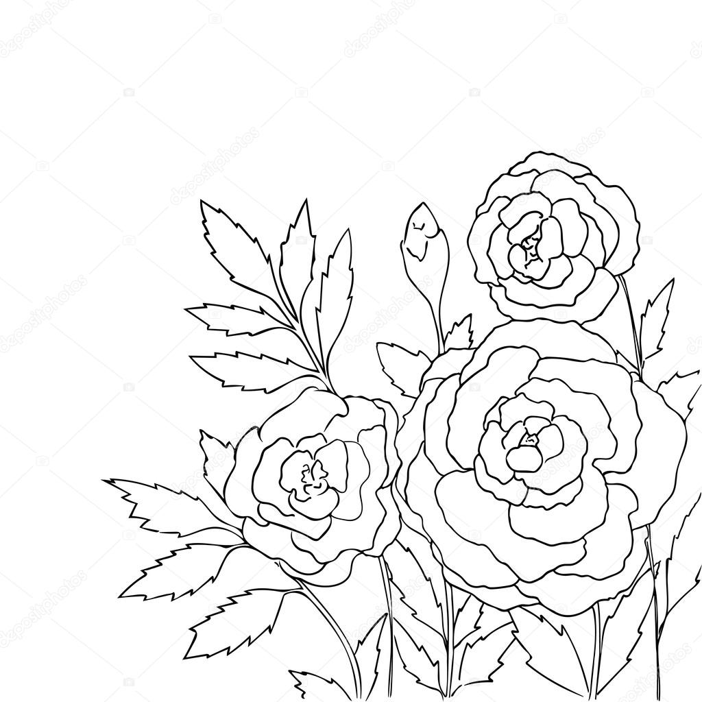 Rosas Bonitas Isoladas No Fundo Branco Entregue A