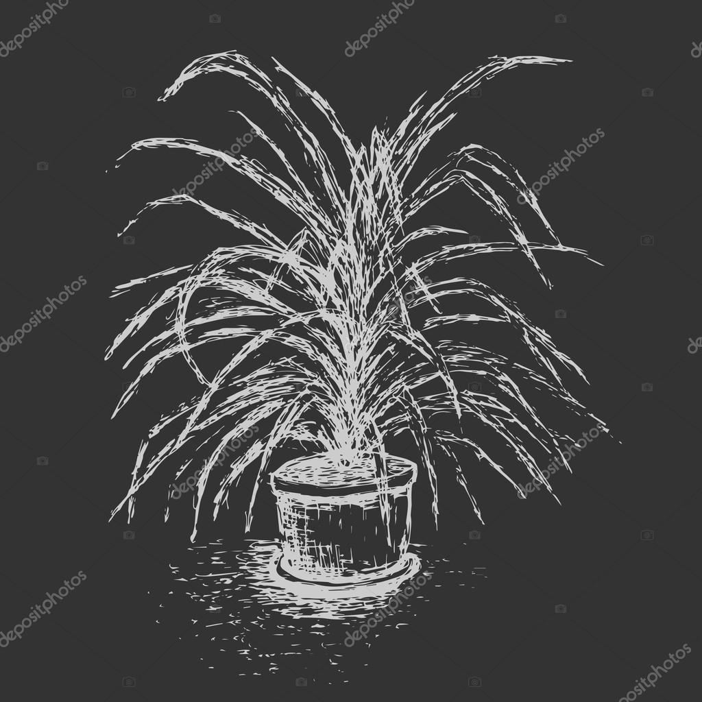 House plant in flower pot isolated on dark gray background. Palm tree ink sketch. Hand-drawn design elements. Chalkboard imitation.  Black and white vector illustration.