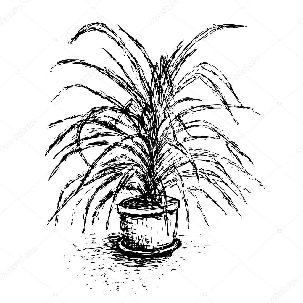 house plant in flower pot isolated on white background palm tree