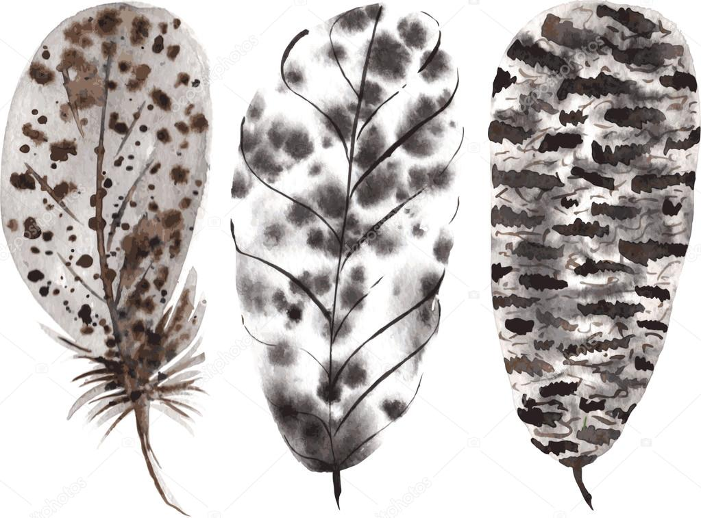 a set of hand-drawn watercolor beige black feathers