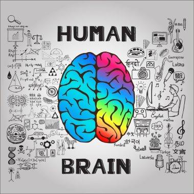 Human brain concept.  Vector