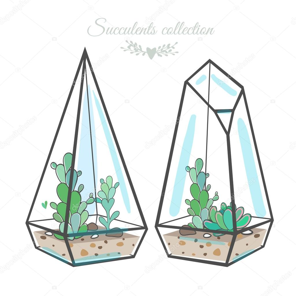 decorative compositions with succulents