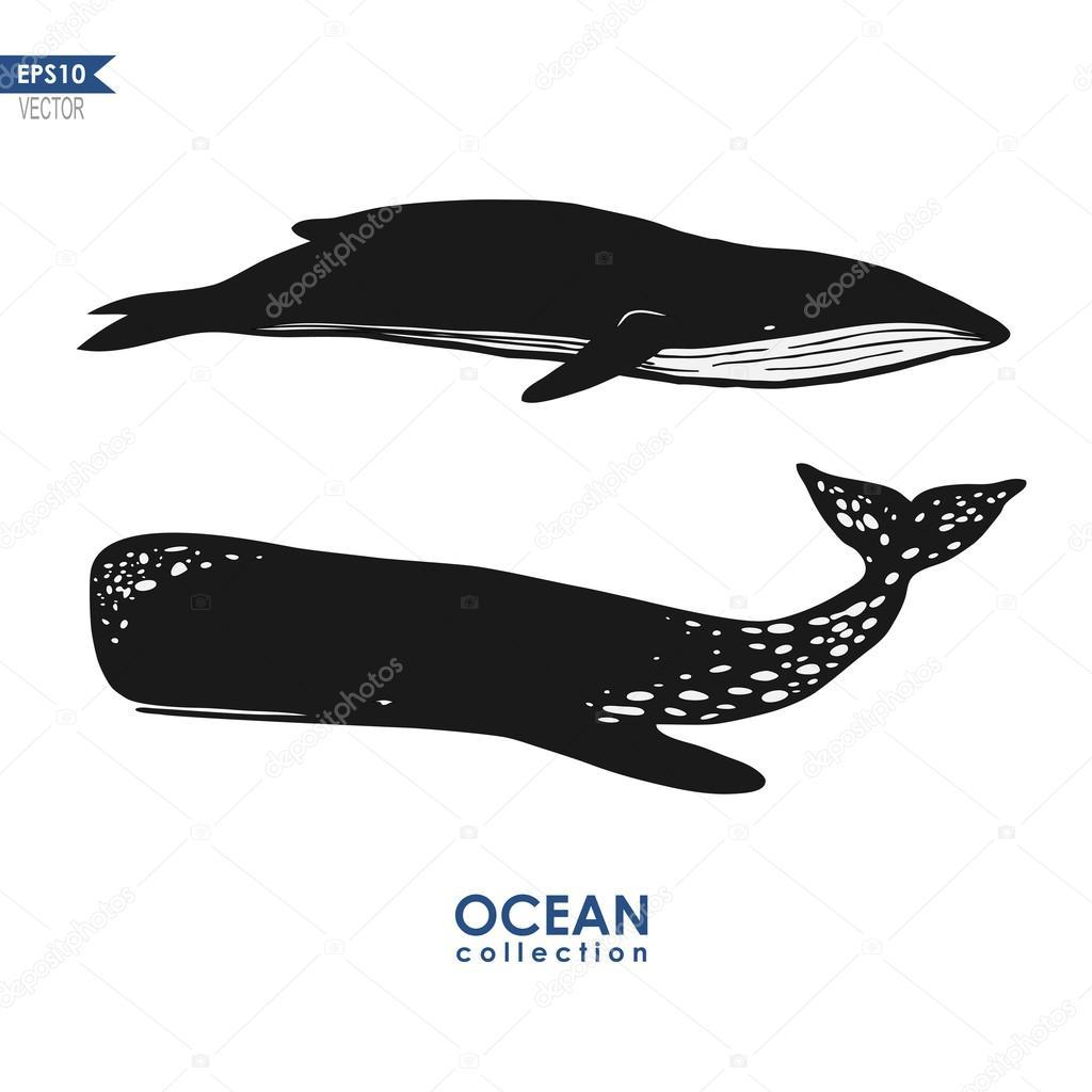 marine mammals: cachalot and big blue whale