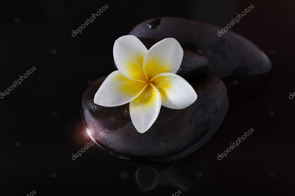 Blume Plumeria oder Frangipani auf Kies und Wasser im Dunkeln ...