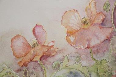 Pink and orange poppies.