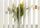 Fényképek virágok az ablakpárkányon