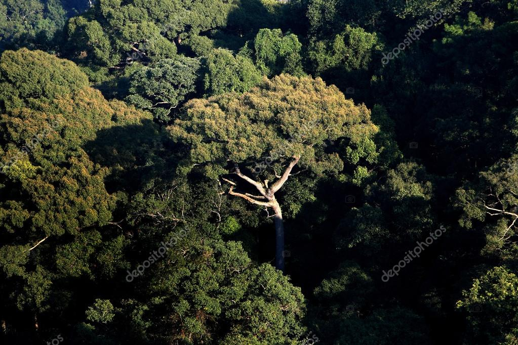 Top view of Rainforest mountain in Chiang Mai, Thailand