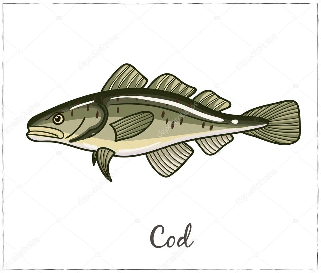 Cod. Fish collection. Vector illustration