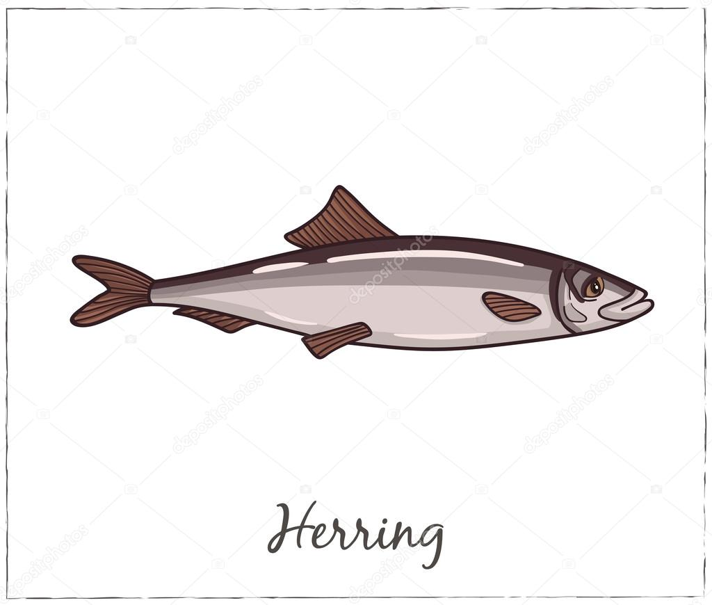 Herring. Fish collection. Vector illustration