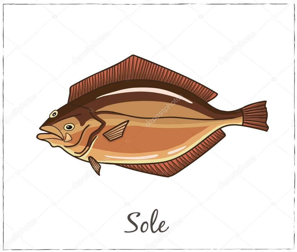 Sole. Fish collection. Vector illustration