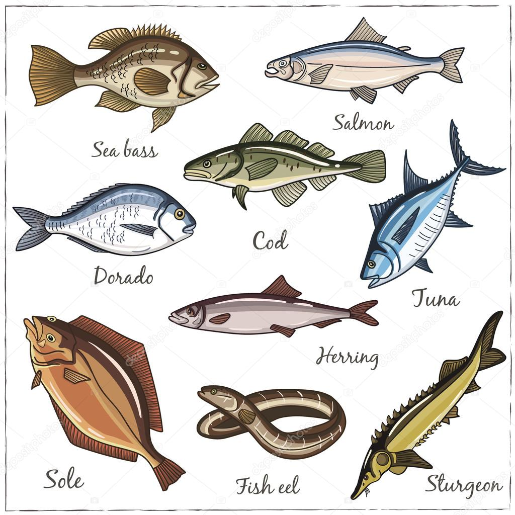 Vector illustration of fish