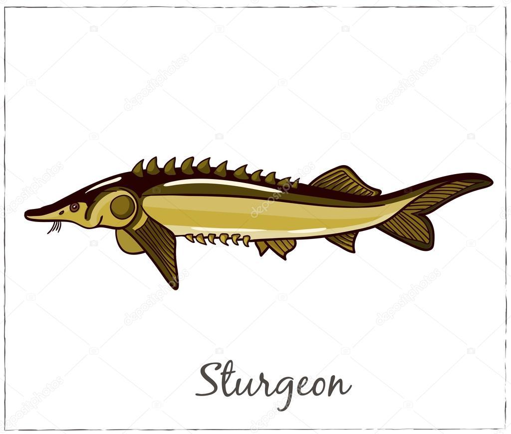 Sturgeon. Fish collection. Vector illustration