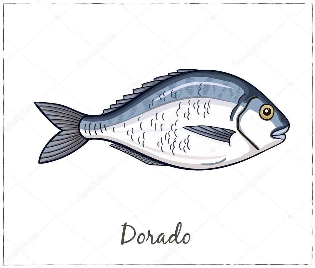 Dorado. Fish collection. Vector illustration
