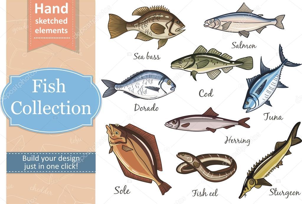 Fish collection Dorado Eel Tuna