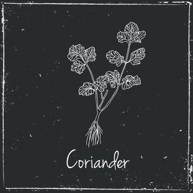 Coriander, Herbs and Spices.