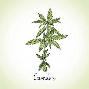 Cannabis herb. Herbs and spices