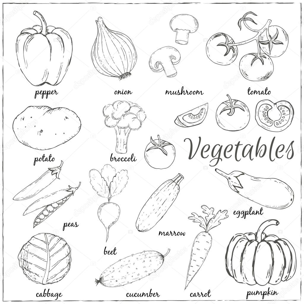 30 Trends Ideas Vegetables Drawing Pictures With Name