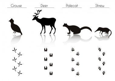 Forest Animals and Birds Silhouettes