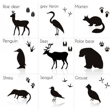 Animals Silhouettes with Name.