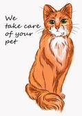 Abbildung Katze zur Werbung für Produkte für Tiere und Tierärzte