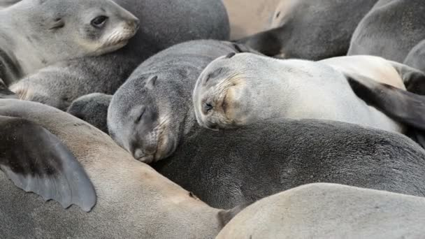 Close up view of a group of small sleeping fur seals
